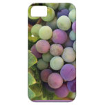 Fresh Grapes and Wine iPhone 5 Cases