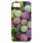 Fresh Grapes and Wine iPhone 5 Cover