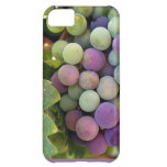 Fresh Grapes and Wine iPhone 5C Cover
