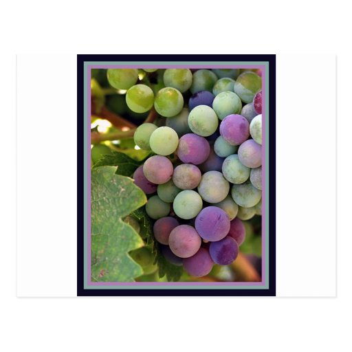 Fresh Grapes and Wine Postcard