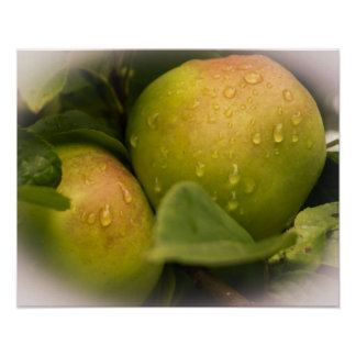 Fresh Green Apples with a Misty Border Poster