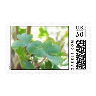 Fresh Green Columbine Foliage Postage