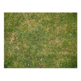 Fresh Green Grass Texture Postcard