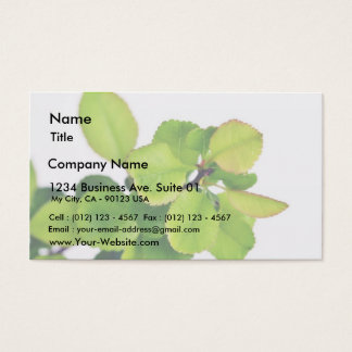 Fresh Green Leaves On White Background Business Card