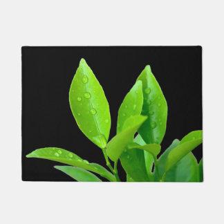 Fresh Green Leaves with Waterdrops on Black Doormat