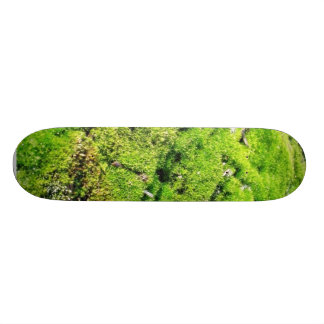 Fresh Green Moss With Some Stones Around. Skate Decks