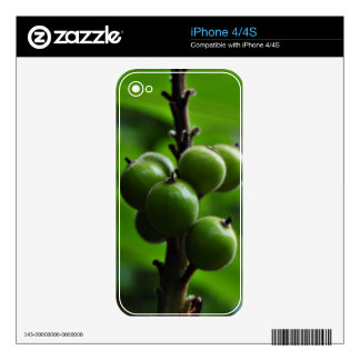 Fresh Green Nature Decal For iPhone 4
