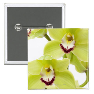 Fresh Green Orchid - Isolated on white Button