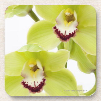 Fresh Green Orchid - Isolated on white Drink Coaster