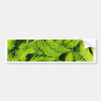 Fresh green sprouts of spruce trees bumper sticker