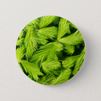 Fresh green sprouts of spruce trees button