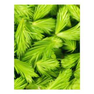 Fresh green sprouts of spruce trees letterhead