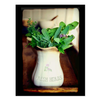 Fresh Herbs Cards Postcard