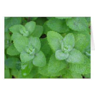 Fresh Herbs Greeting Card