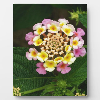 Fresh Lantana Flower Against Leaf Background Plaque