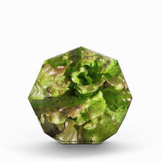 Fresh lettuce growing in the field. Tuscany, Italy Acrylic Award
