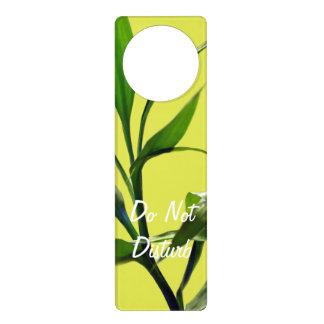 Fresh lucky bamboo green leaves in green door hanger