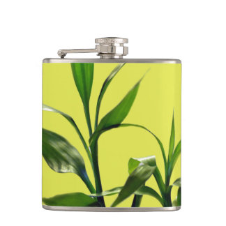 Fresh lucky bamboo green leaves in green hip flask