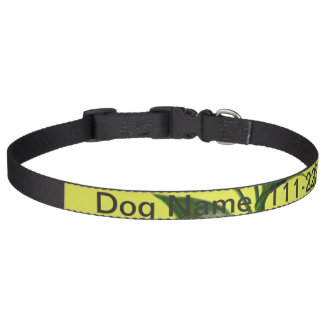 Fresh lucky bamboo green leaves in green pet collar