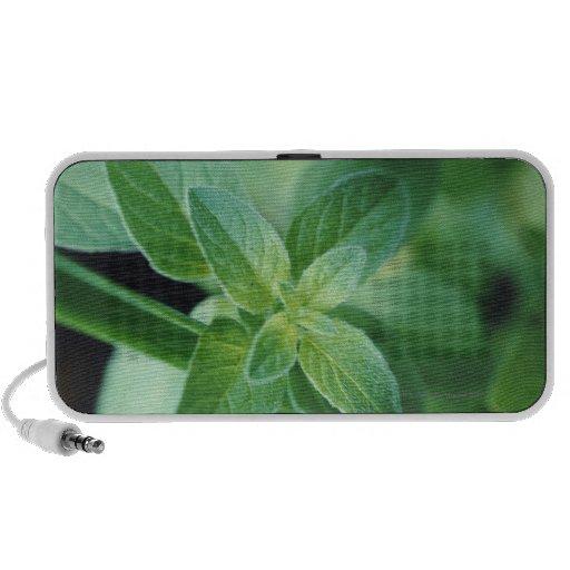 Fresh mint leaf travelling speakers