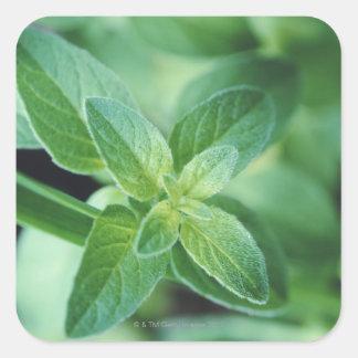 Fresh mint leaf square sticker