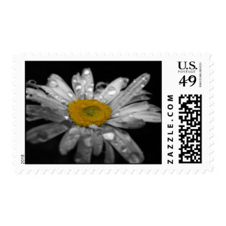Fresh Morning Daisy Postage Stamp
