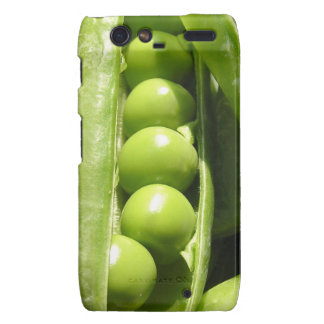 Fresh open green pea pods in sunlight droid RAZR covers