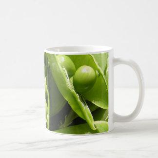 Fresh open green pea pods in sunlight coffee mug