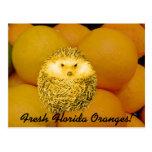 Fresh Orange Hedgehog Post Cards