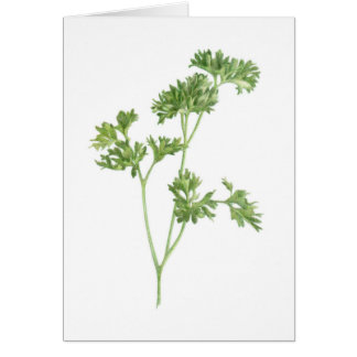 Fresh Parsley - Blank Greeting Card