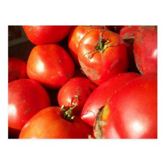 Fresh Picked Tomatoes Postcard