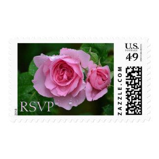 Fresh Pink Roses RSVP Postage Stamps