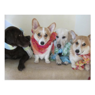 Fresh Produce scarves on puppies Post Cards
