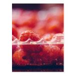 Fresh Raspberries Photography Art Postcard