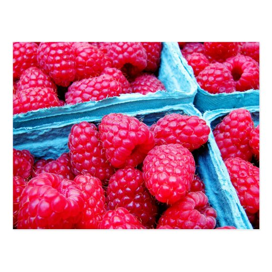 Fresh Raspberries Postcard
