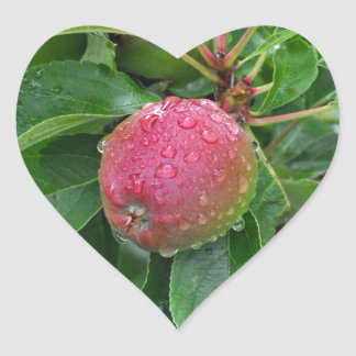 Fresh red apple on tree heart sticker