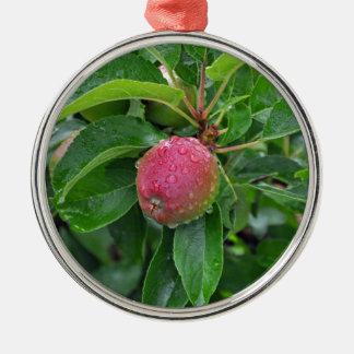 Fresh red apple on tree metal ornament