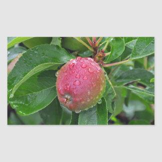 Fresh red apple on tree rectangular sticker