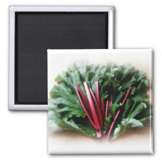 Fresh Rhubarb Stalks and Leaves 2 Inch Square Magnet