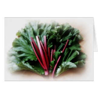 Fresh Rhubarb Stalks and Leaves Cards