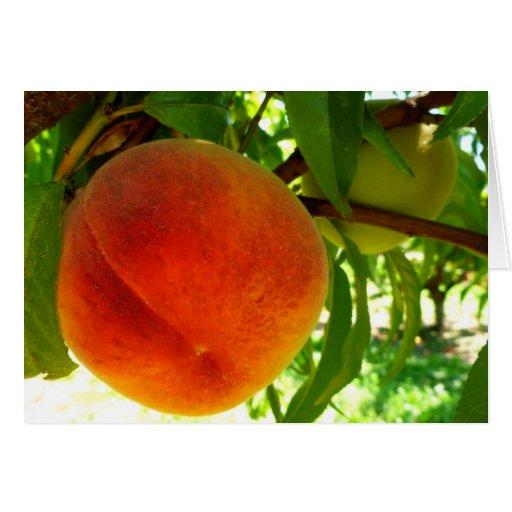 Fresh Ripe Peach Cards