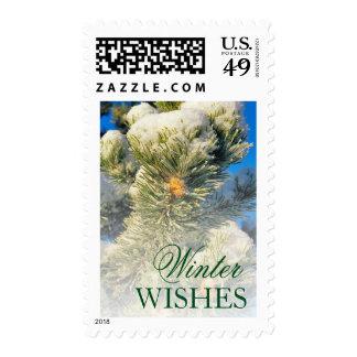 Fresh snow on Pine Needles Postage Stamp