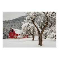 Fresh snow on red barn poster