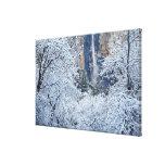 Fresh snowfall in the trees below Bridalveil Canvas Print