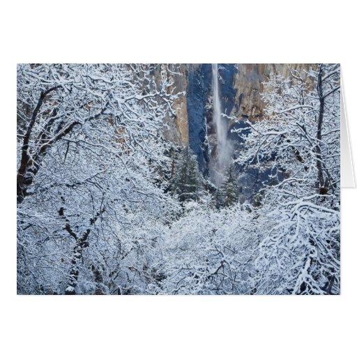 Fresh snowfall in the trees below Bridalveil Greeting Card