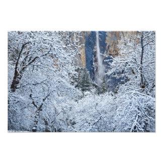 Fresh snowfall in the trees below Bridalveil Photograph