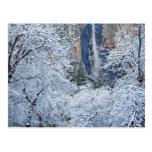 Fresh snowfall in the trees below Bridalveil Postcard