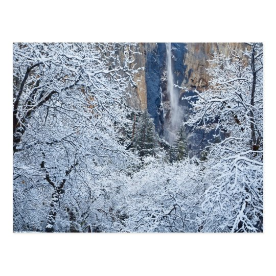Fresh snowfall in the trees below Bridalveil Postcard