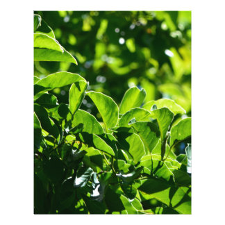 Fresh spring green leaves. nature photography. flyer