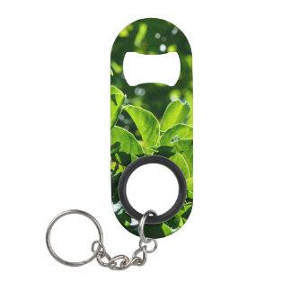 fresh spring, summer green leaves bottle opener. mini bottle opener